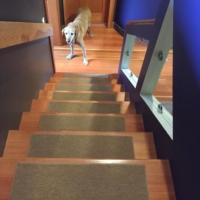 Our Senior Dog Titan Appreciates The Grip These New Stair Treads Give Him!