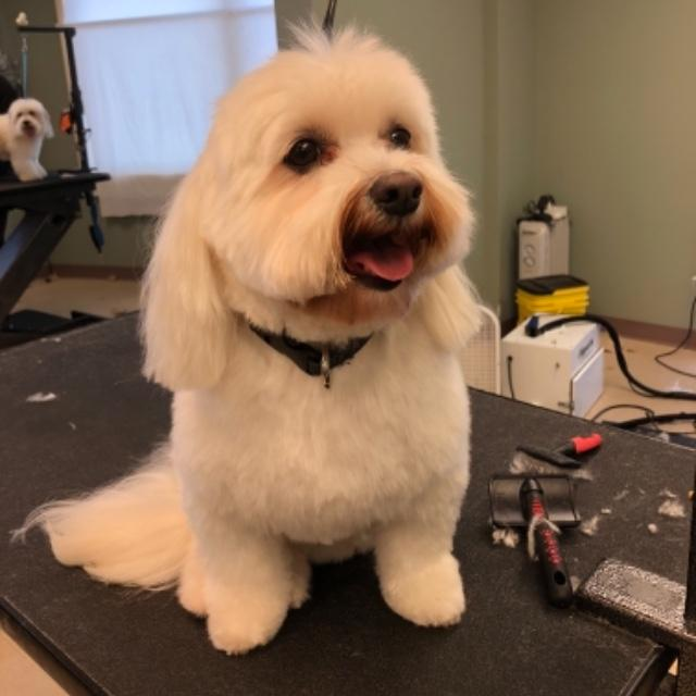New groomer, finished my first solo groom!